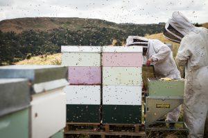 Egmont Honey Imker und Bienenstöcke